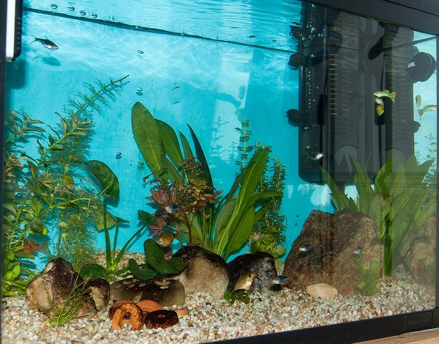 Best aquarium vacuum gravel cleaner 2016 reviews fish for How to clean an old fish tank