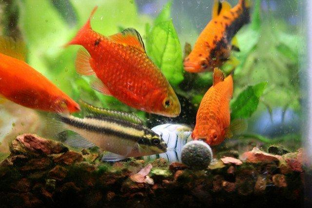 New Life Spectrum Tropical Fish Food