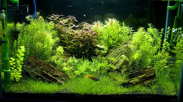 Best rimless fish tanks in 2018 reviews fish tank advisor for Best water for fish tank