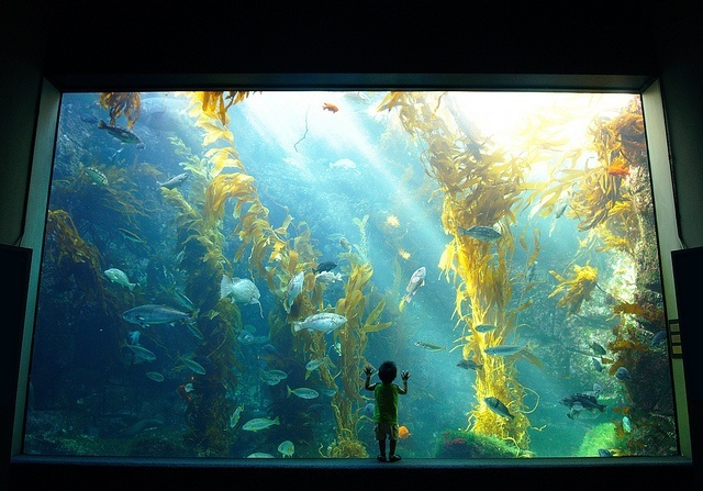 a huge wall fish tank