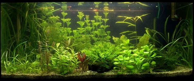a nice glass fish tank