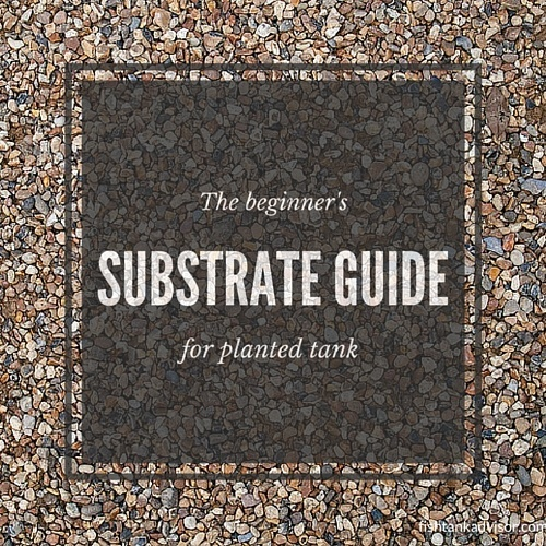 Beginneru0027s Substrate Guide For Planted Tank