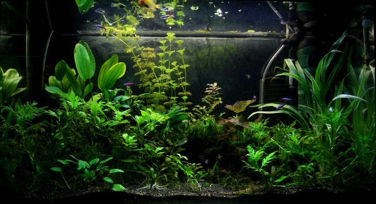 beautiful planted tank