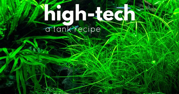 A tutorial to help you with your first high tech planted tank