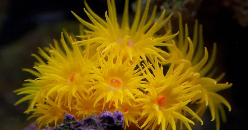 Kamoer X4 Wifi Dosing Pump For Marine Fish Reef Aquarium Pet Supplies