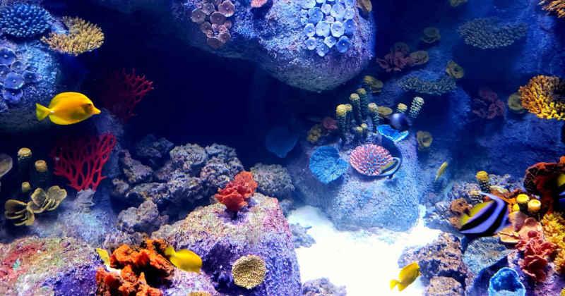 Best Aquarium Return Pumps In 2019 Reviews