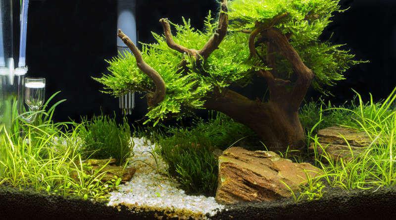 Aquarium Driftwood • Best & Safest Types for your Tank